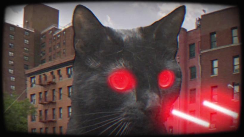 Laser Cat